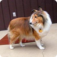Adopt A Pet :: Duncan - Charlottesville, VA