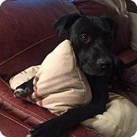 Adopt A Pet :: Eloise - Boulder, CO