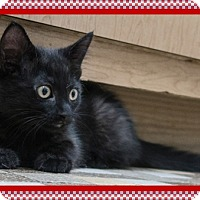 Adopt A Pet :: TC - Mt. Prospect, IL