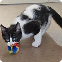 Adopt A Pet :: Chase - Toronto, ON