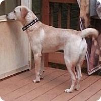 Adopt A Pet :: Demie - Acworth, GA