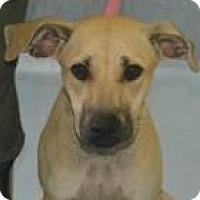 Adopt A Pet :: Susan - Walden, NY