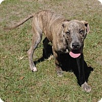 Adopt A Pet :: Viking - Ridgeland, SC