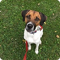 Hound (Unknown Type) Mix Dog for adoption in Nesquehoning, Pennsylvania - Jasper
