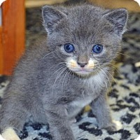 Adopt A Pet :: Ramrod - Alpharetta, GA