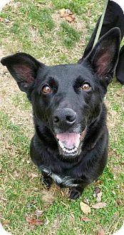 German Shepherd Dog Dog for adoption in Baltimore, Maryland - Diesel
