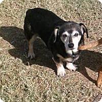 Adopt A Pet :: BEAR - Lubbock, TX