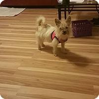 Adopt A Pet :: Fit Bit - Harmony, Glocester, RI