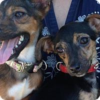 Adopt A Pet :: Figgy and Fritz - St. Francisville, LA
