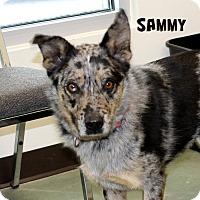 Adopt A Pet :: Sammy - Edgewood, NM