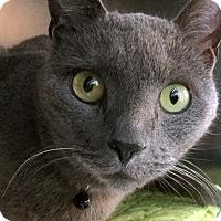 Adopt A Pet :: Grady - Philadelphia, PA