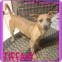 Adopt A Pet :: TIFFANY - Allentown, PA