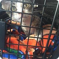 Adopt A Pet :: Huckleberry - Gainesville, FL
