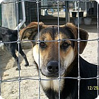 Adopt A Pet :: Wendy - Mexia, TX
