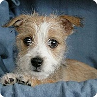 Adopt A Pet :: Daphne - Sacramento, CA
