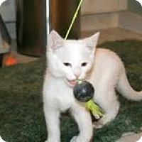 Adopt A Pet :: Delaney - Arlington, VA