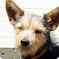 Adopt A Pet :: SHEILA - Torrance, CA