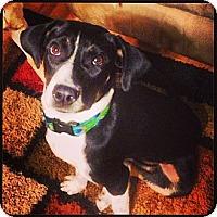 Adopt A Pet :: Lemon - Homewood, AL