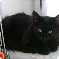 Adopt A Pet :: Bella - Etobicoke, ON