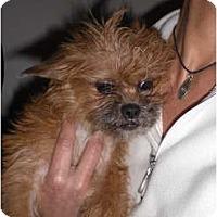 Adopt A Pet :: Roxi - Rescue, CA
