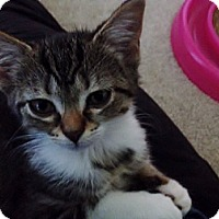 Adopt A Pet :: Tabitha - Byron Center, MI