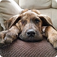 Adopt A Pet :: Emmitt - Parker, CO