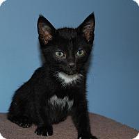 Adopt A Pet :: Lil Boo - McDonough, GA