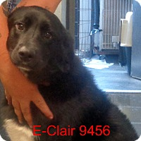 Adopt A Pet :: E Clair - baltimore, MD