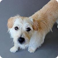 Adopt A Pet :: Zander - Atlanta, GA