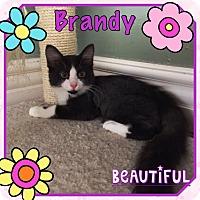 Adopt A Pet :: Brandy - Orange, CA
