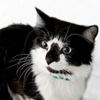 Adopt A Pet :: Daisy - St. Charles, IL