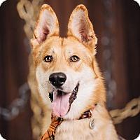 Adopt A Pet :: Cassidy - Portland, OR