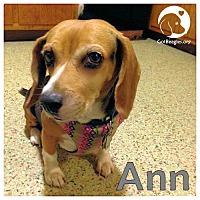 Adopt A Pet :: Ann - Pittsburgh, PA