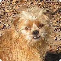 Adopt A Pet :: Ruff - Harrisonburg, VA