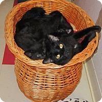 Adopt A Pet :: Mariah - Seminole, FL