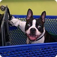 Adopt A Pet :: Zeus Thunderbolt TN - various cities, FL
