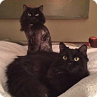 Adopt A Pet :: Adonis and Athos (Don & Artie) - New York, NY