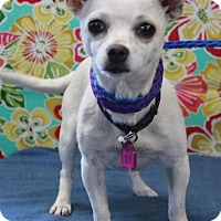 Adopt A Pet :: TRACY - Gustine, CA