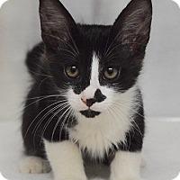 Adopt A Pet :: Robin - Dublin, CA