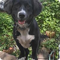 Adopt A Pet :: Libby - Bradenton, FL