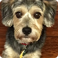 Adopt A Pet :: Lucky~~ADOPTION PENDING - Sharonville, OH