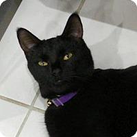 Adopt A Pet :: Mickey 2 - Hampton, VA