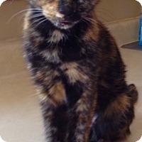 Adopt A Pet :: Reba - Covington, KY