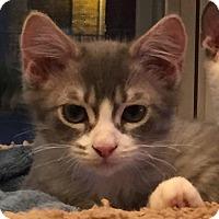 Adopt A Pet :: Hank (with Tank) - Fairfax, VA