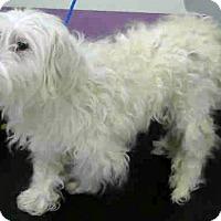 Adopt A Pet :: Earl-Adoption Pending - Boulder, CO