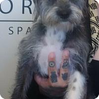 Adopt A Pet :: Randy - Thousand Oaks, CA