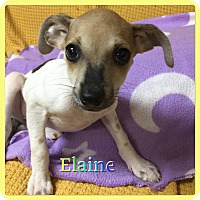 Adopt A Pet :: Elaine - Hollywood, FL