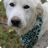 Adopt A Pet :: Tito - Garland, TX