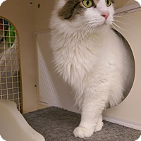 Adopt A Pet :: Chanel-adoption pending - Bridgeton, MO