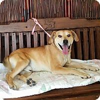Adopt A Pet :: Ebbo - Atchison, KS